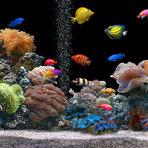 Peixe para aquário, lindas espécies