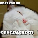 Os gatos mais engraçados #2 - Impossível não rir.