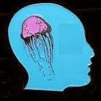 Animais - Sobre as medusas