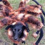 Conheça o Cãoaranha, uma mutação que vai assombrar você