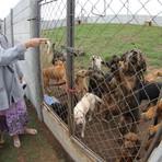 """Família pede """"socorro"""" para cuidar 355 animais vamos divulgar"""