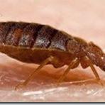 Cuidado com o Bedbugs!