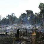Meio ambiente - Área de florestas intactas no Brasil diminuiu 8% em 13 anos