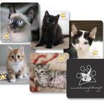 Animais - Ajuda para Adote um gatinho