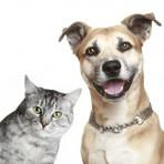 Animais - Onde vacinar gratuitamente cães e gatos contra a raiva