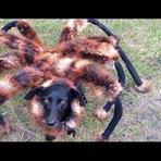 Vídeos - Pegadinha do cachorro vestido de aranha