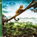 Meio ambiente - Amazônia - O Maior Tesouro do Brasil
