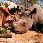 Animais - As extinções estão mil vezes maiores do que antes dos humanos aparecerem