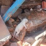 Animais - Uma casa foi demolida com dezenas de gatos vivos dentro
