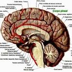 Saúde - Pilates para o Cérebro!