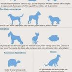 Você sabe qual o animal ideal para cada dono ?