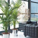 Plantas para apartamento dicas
