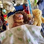 """Facebook rejeita foto de bebé doente por considerar que é """"demasiado gráfica"""""""