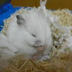 Quanto custa ter um hamster