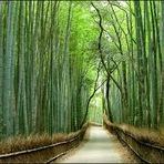 Curiosidades - Arte com Bambus!