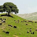 Curiosidades - Curdistão, Iraque