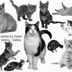 Pixlr brushes By JotaV - Cats- Gatos