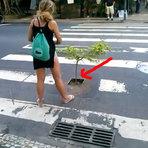 Mulher Planta Árvores em Buracos nas ruas no Rio Janeiro, após ela cair e quebrar o queixo