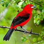 Curiosidades - A Beleza dos Pássaros!