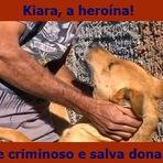 Violência - Cadela morde criminoso e salva dona de estupro