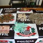 POLÍCIA CIVIL PRENDE DOIS TRAFICANTES EM REGISTRO-SP