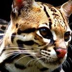 6 consequências de um mundo sem animais