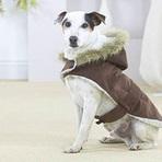 Roupas de inverno para cachorro