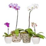 Arranjos com orquídeas e seus segredos