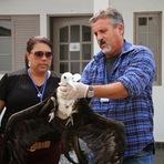 Ação de voluntários ajuda a salvar aves e animais marinhos na Ilha Comprida e em Iguape