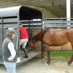 Trailer Para Cavalos, dicas de transporte e segurança