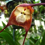 Curiosidades - Flores raríssimas e de incríveis formatos!
