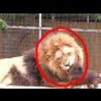 Vídeo - Cachorro Invade Jaula de Animal Selvagem no Zoológico e Algo Mágico Acontece; confira