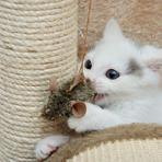 Aprenda A Fazer Brinquedos Para Gatos, Veja As Dicas Mais Bacanas!