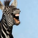 As maiores páginas do facebook para você pegar fotos engraçadas e postar com amigos