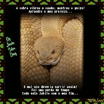 Poesias - Reflexão: A cobra vibrou a cauda: Mostrou o guizo!