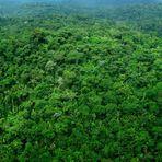 Artigo: A manutenção da vida depende da preservação das florestas, por Malena Damasceno