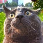 Reação de gatos ao saírem pela primeira vez de casa