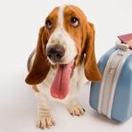 São Paulo tem menor média de hotéis para quem viaja com animais de estimação