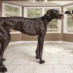 Morre o maior cão do munod
