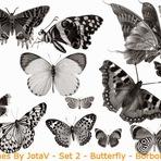Softwares - Pixlr brushes By JotaV - Butterfly - Borboletas