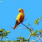 Meio ambiente - Mais de 170 aves silvestres brasileiras são apreendidas pela Policia Judiciária de Portugal