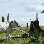 MPF cobra Agro Santa Bárbara (do Lulinha e Dantas) por 51 mil hectares de área desmatada.