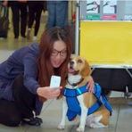 Animais - Eles tem a missão de devolver objetos perdidos dentro do avião. A forma como fazem é adorável!