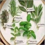 Saúde - Ervas aromáticas, toque de saúde nos alimentos