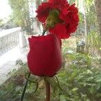 Flores o ano todo! - Decoração - Blog Minascasa