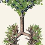Colagens botânicas surreais de Travis Bedel