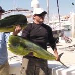 Hobbies - Cade meu peixe?