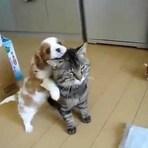 Cãozinho atormenta o gatinho