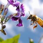 Meio ambiente - 3 de Outubro: dia das abelhas