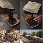 Embalagens de papel que se dissolvem na natureza